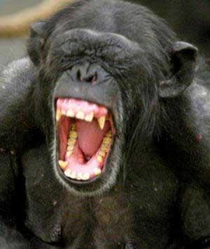 Macaco Vê, Macaco Faz!